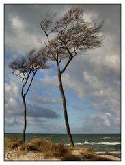 Windflüchter