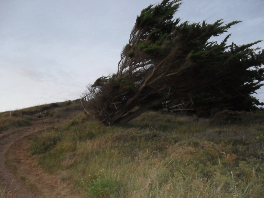 Windflüchter in der Bretagne