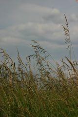 Windgräser