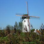 Windmolen/ Windmühle in Damme, Belgien - Eulenspiegelort