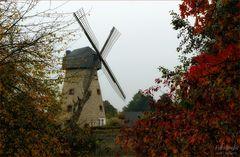 Windmühle Laer