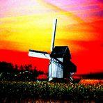 Windmühle mit Maisfeld in Hondschoote, Frankreich, Pas-de-Calais