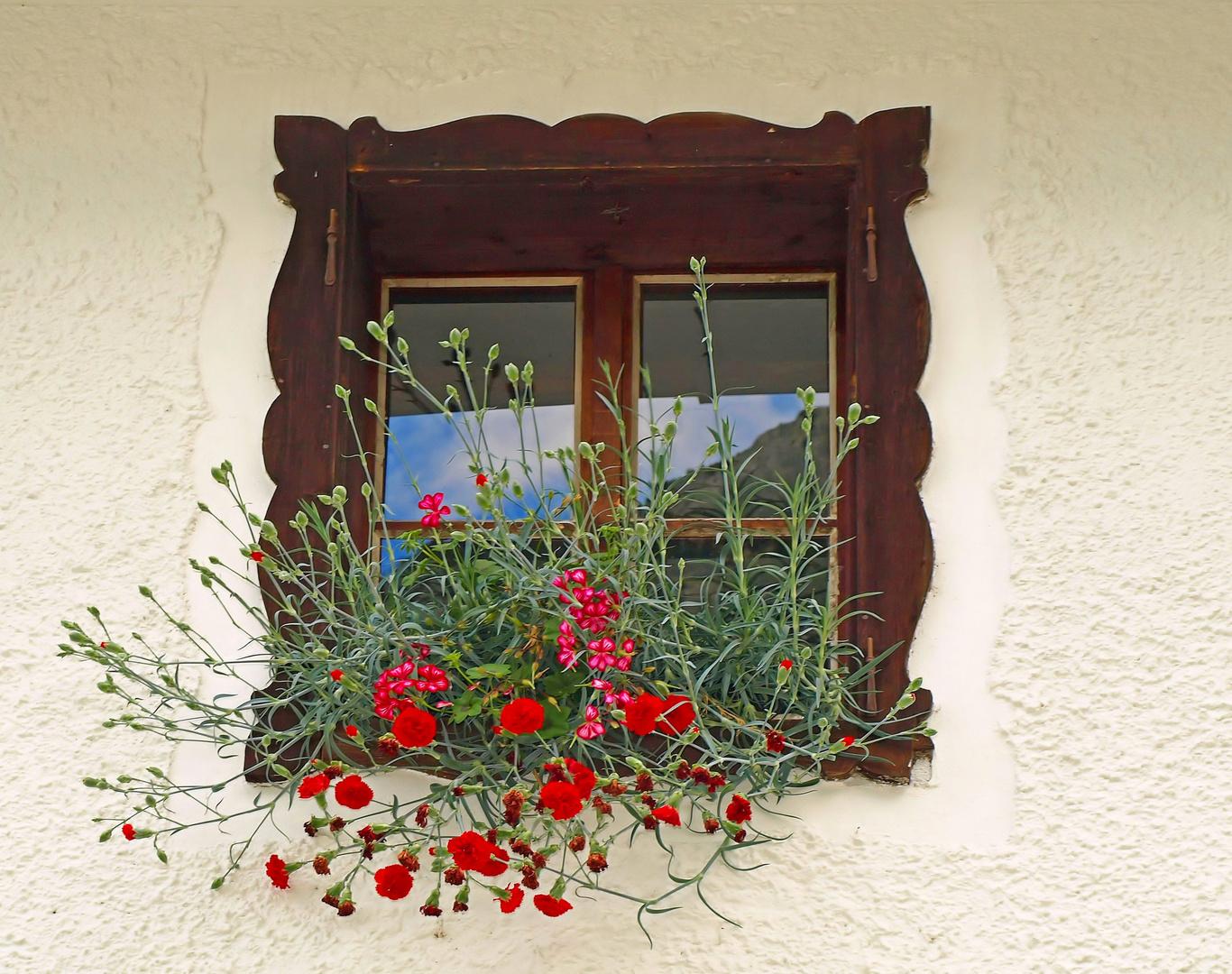 Window & Flowers.