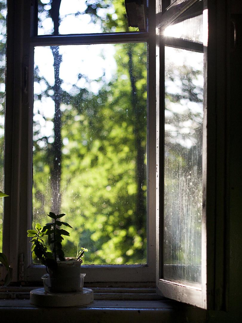 Window-Wonderland