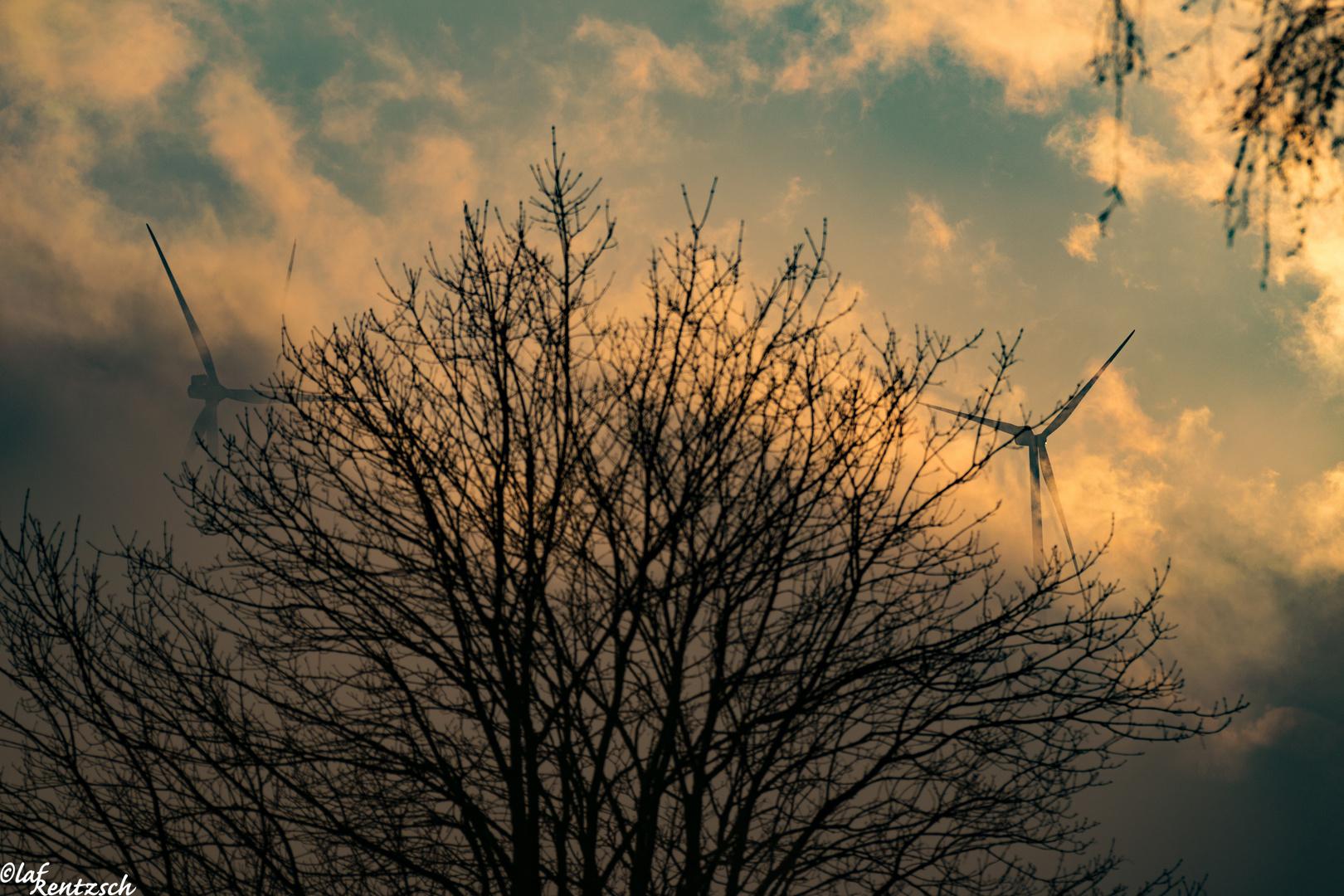 Windräder im Nebel 4