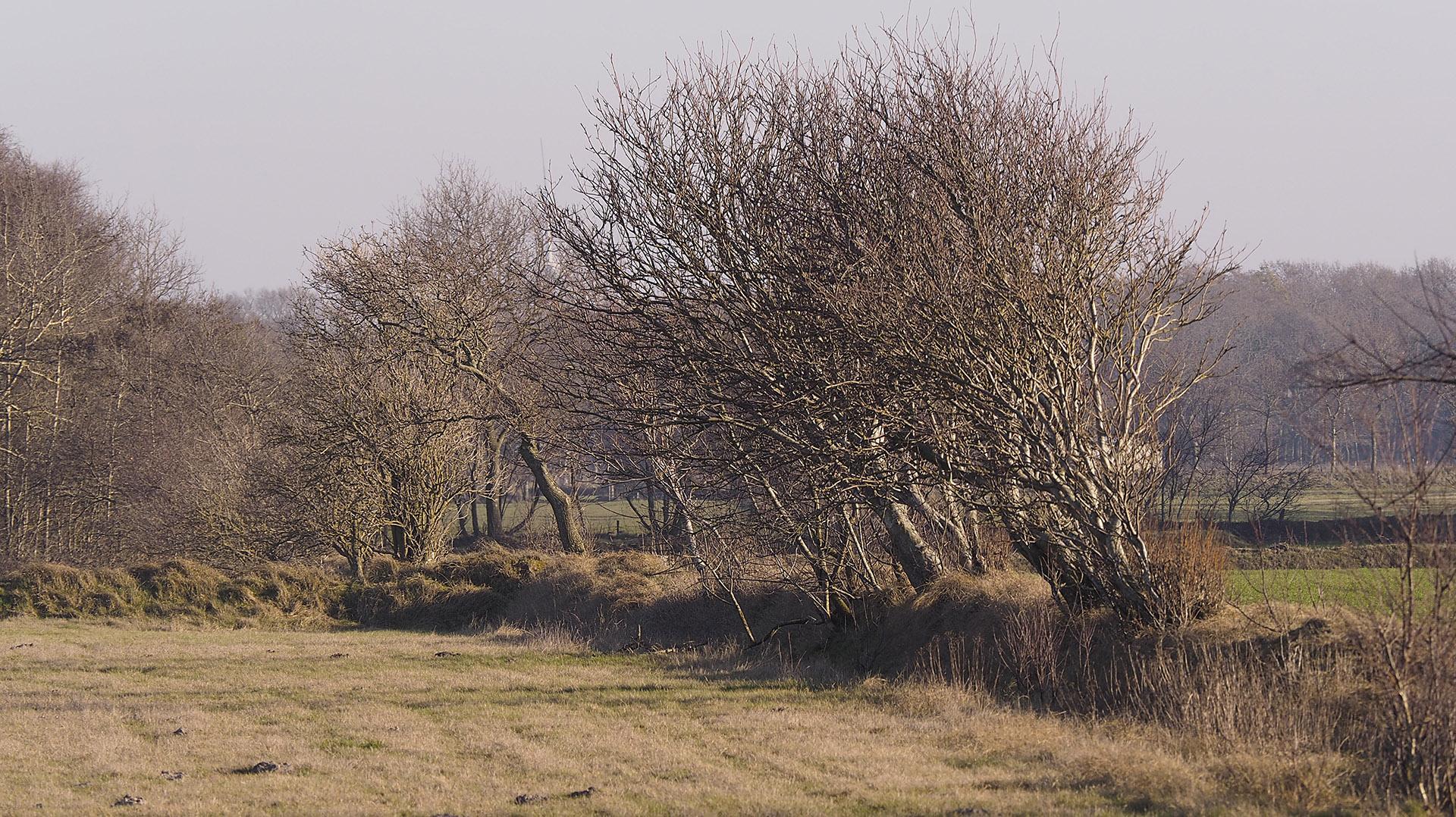 Windschief - Geest zwischen Duhnen und Sahlenburg (Farbe)