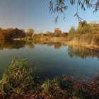 Windstille am Teich