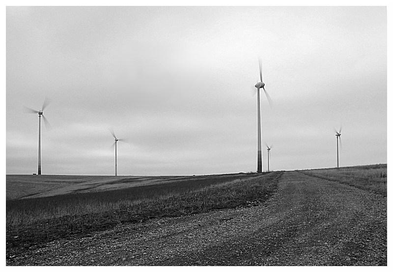 Windwald