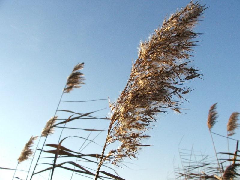 Windwork