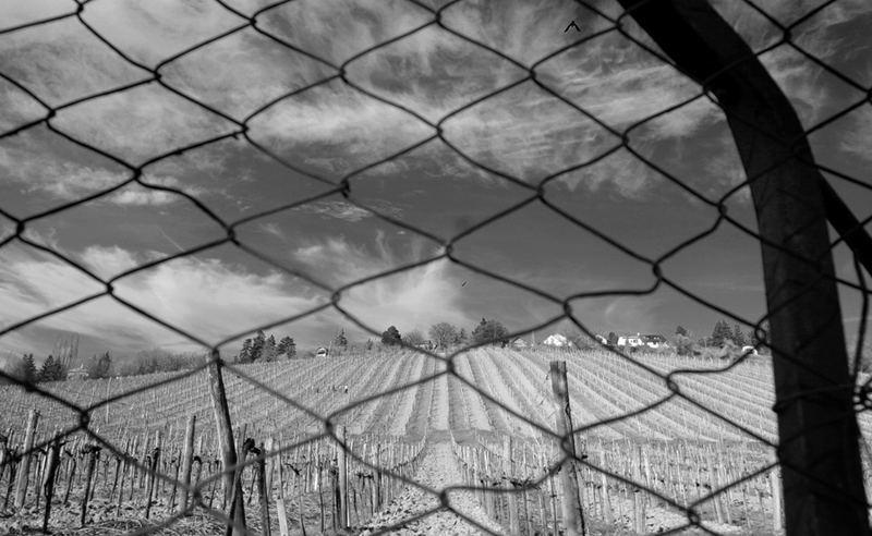winegarden