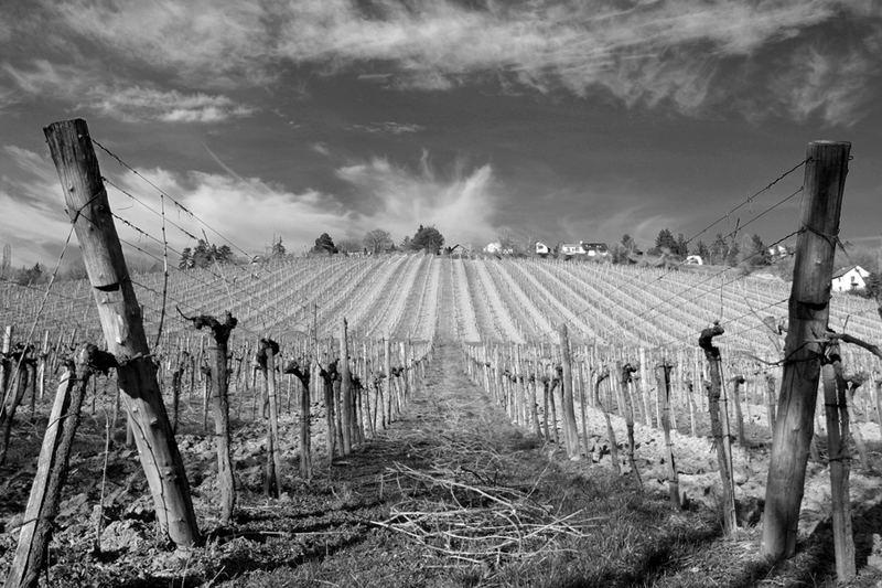 winegarden2