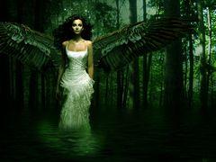 * Wings *