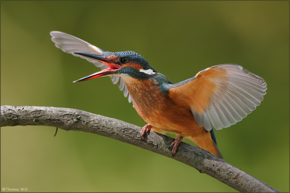 [ wings of kingfishers ~7 ]