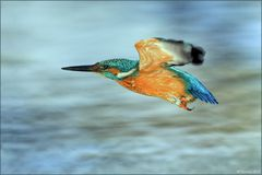 [ wings of kingfishers ~9 ]