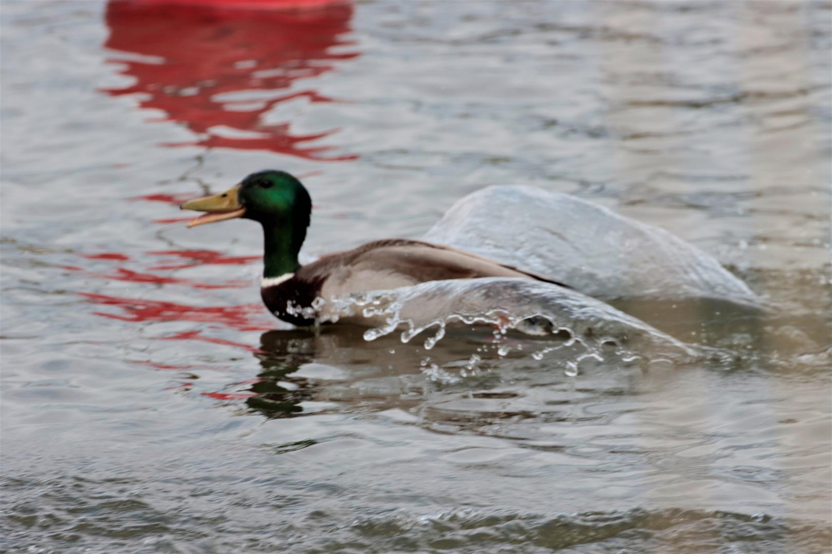 wings of water
