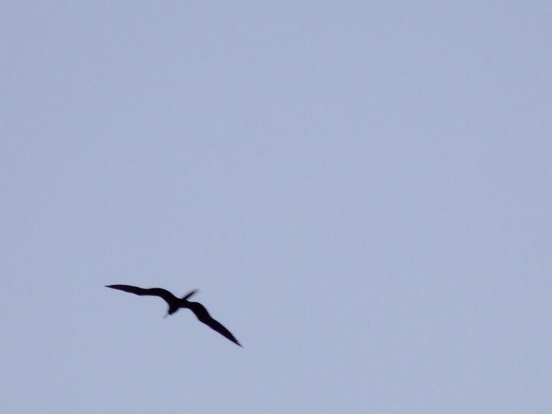 wings of wind