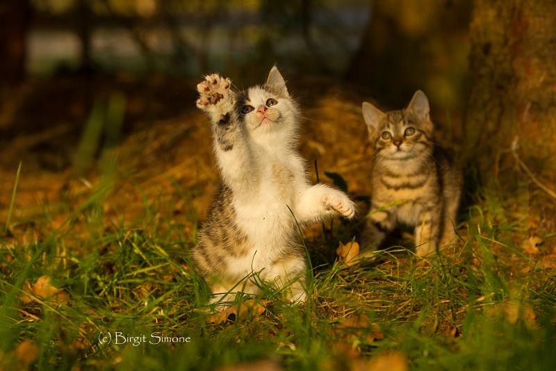 Winke, winke!! ;-)