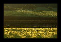 ...winkende Sommer-Felder... (1. der Serie SOMMER- FELDER 2007)