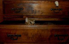 Winnie in der Schublade