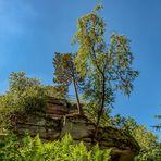 Winschertfelsen bei Merzalben im Pfälzer Wald