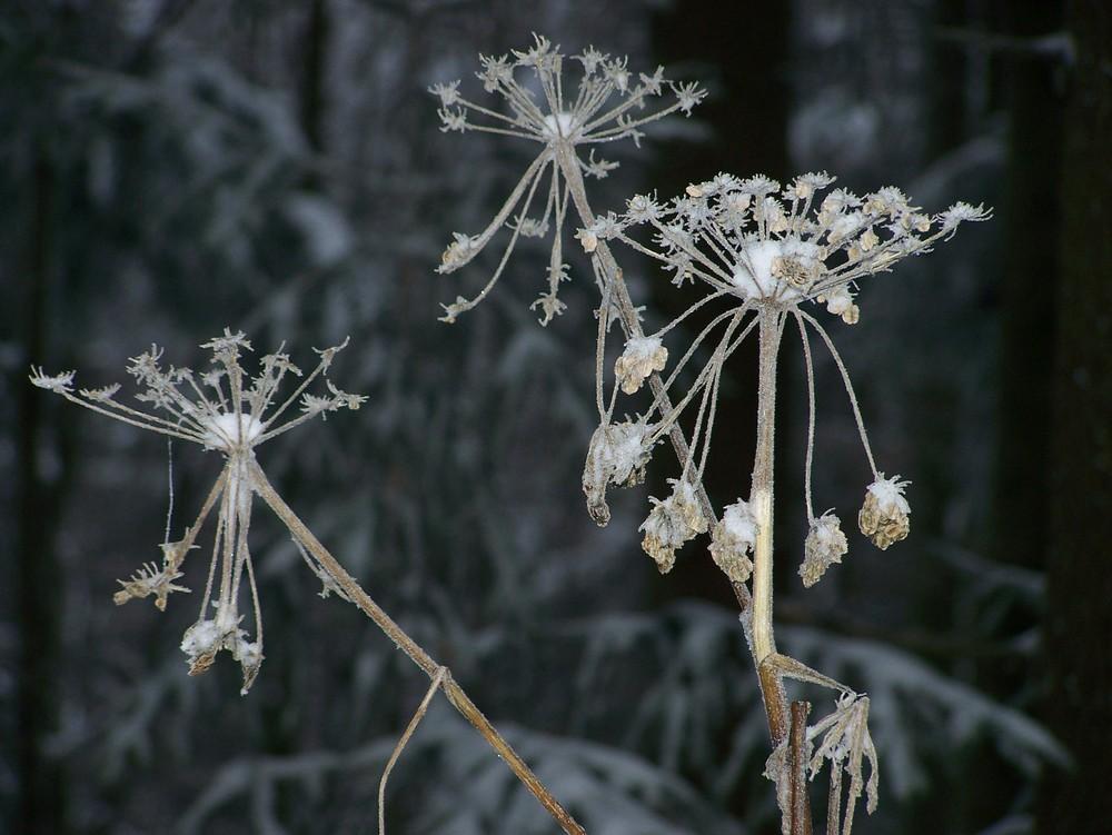 Winter ---00oo00oooo---
