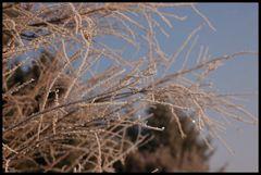 Winter 08 II