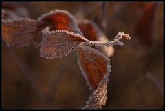 Winter 08 III