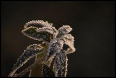 Winter 08 IV