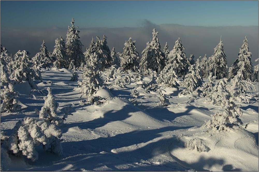 ( Winter )