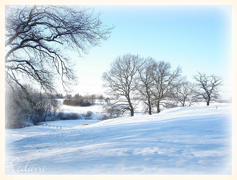 Winter 2008/2009 ~ Feld