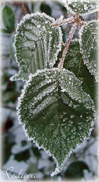 Winter 2008/2009 ~ Frost