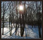 Winter 2008/2009 ~ Wald