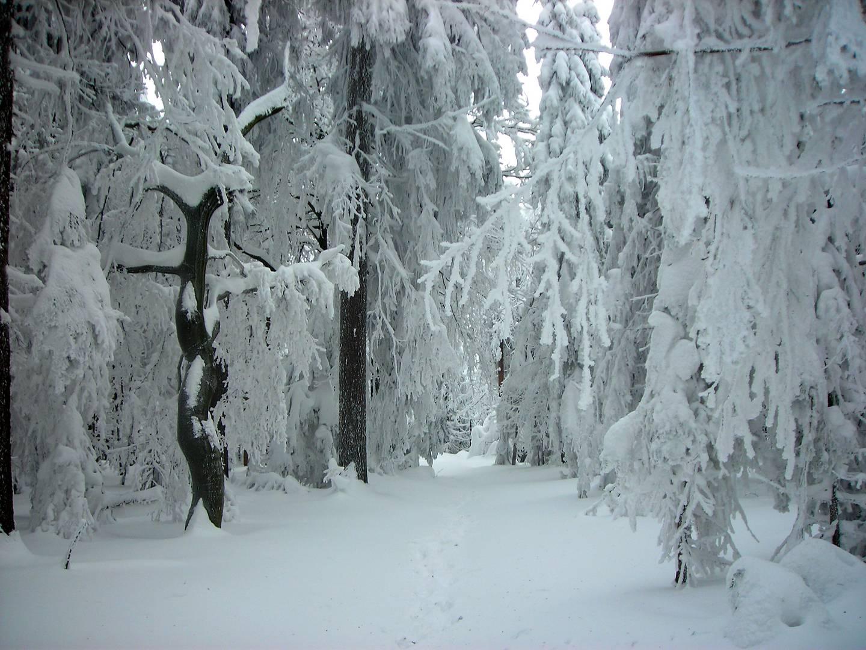 Winter 2010 im Steinwald