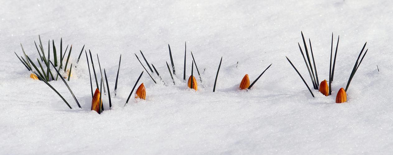 Winter 2012/2013  x-te Verlängerung