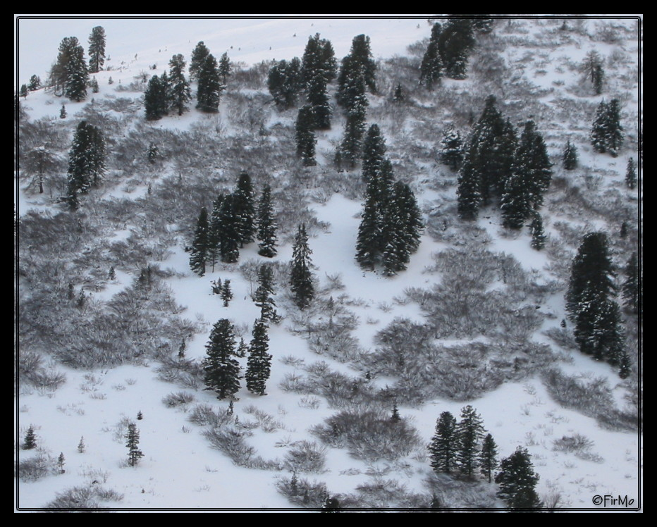 °°° Winter °°°
