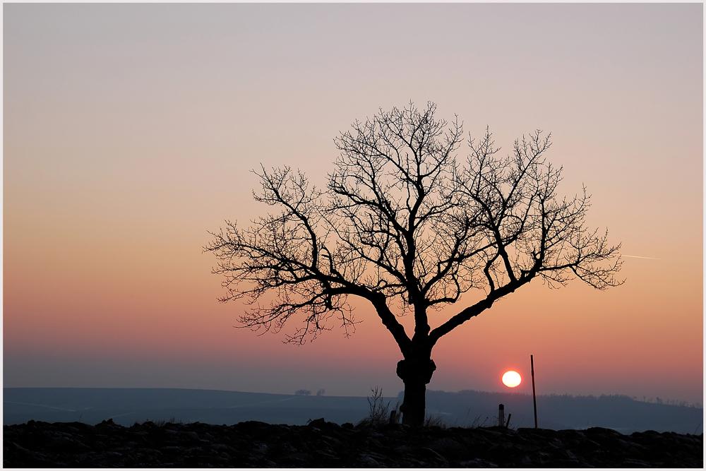 Winter - Abendsonne 3