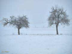 Winter ade?