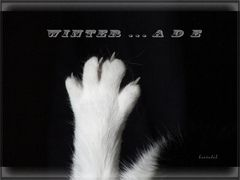 """Winter... ADE...!"""