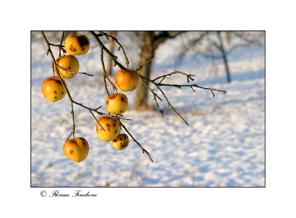 Winter - Äpfel