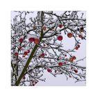 Winter-Äpfel