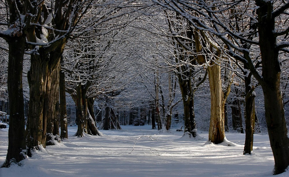 Winter Allee
