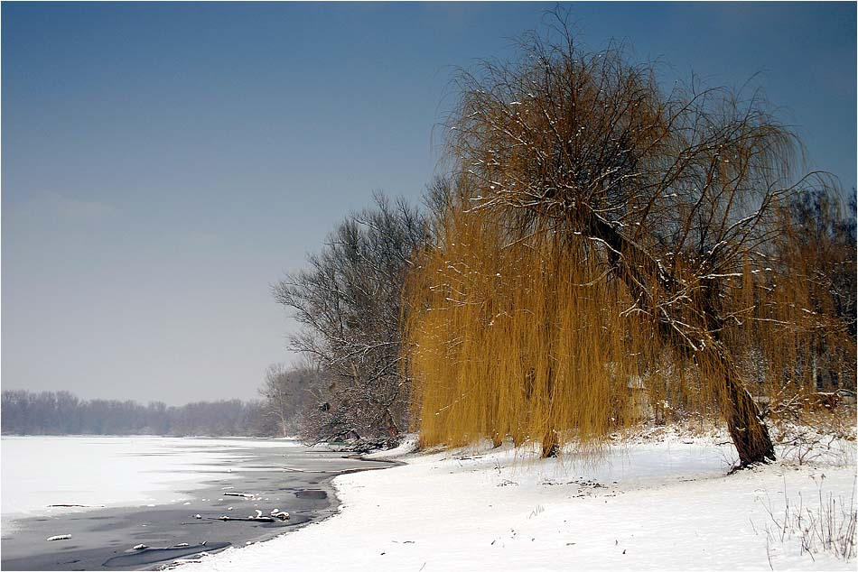 Winter am Altrhein I