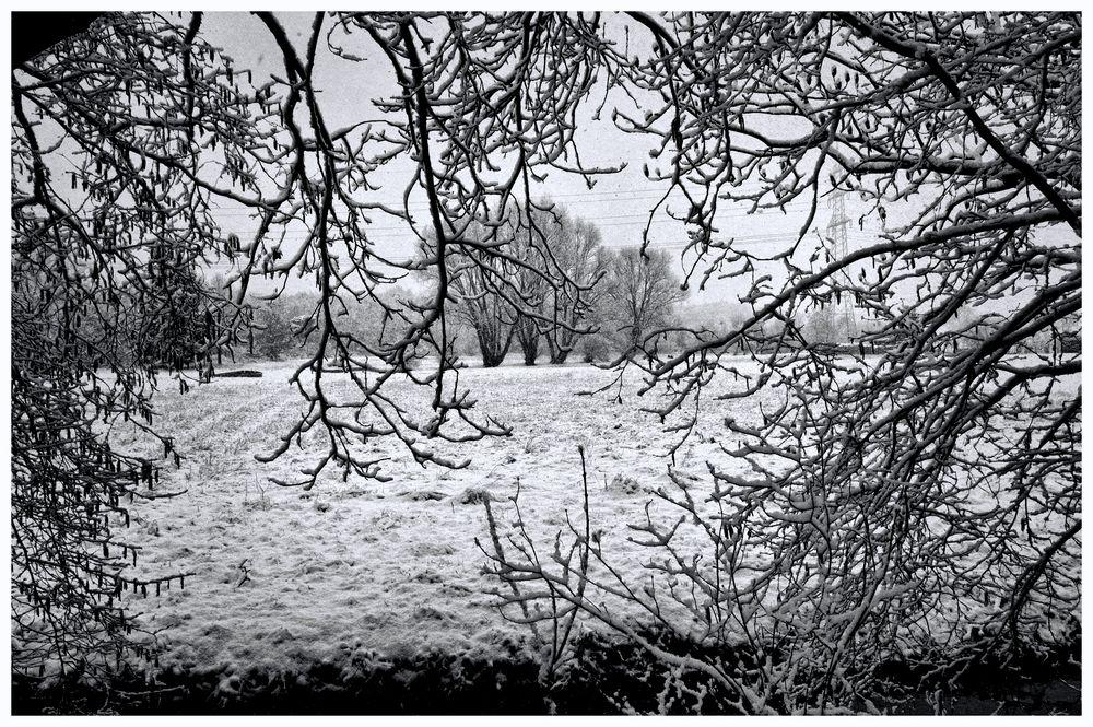 Winter am Bach III