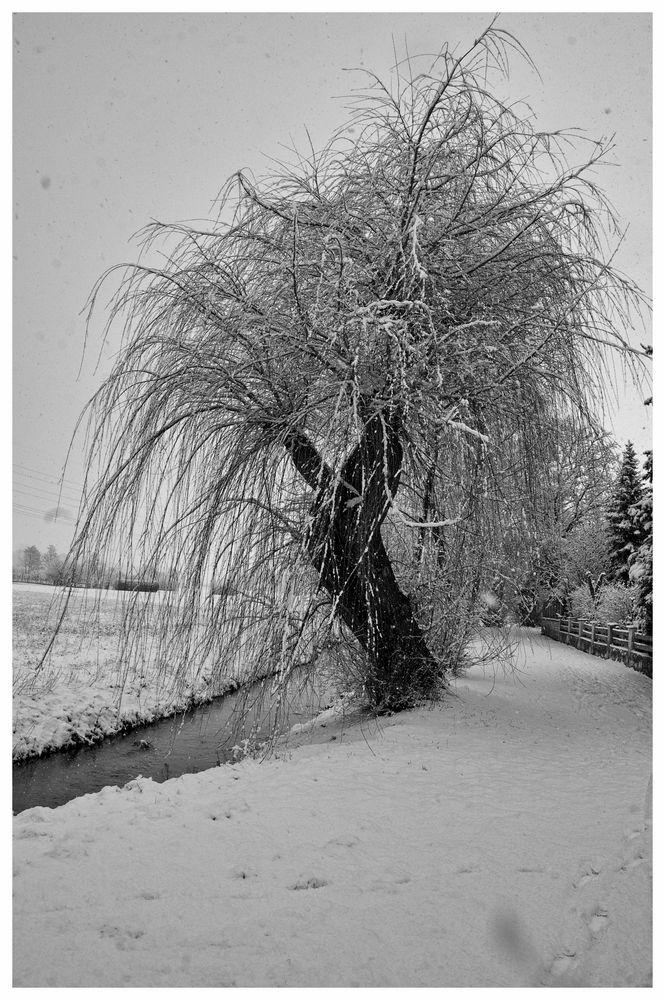 Winter am Bach V