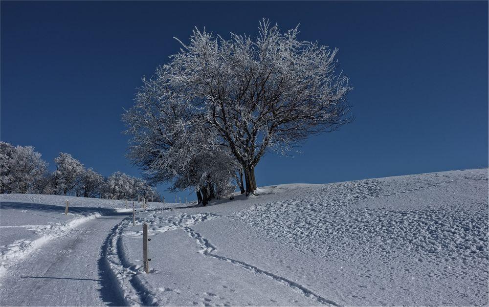 Winter am Balmberg