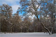 Winter am Entenfang