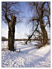Winter am Ewaldsee (2)