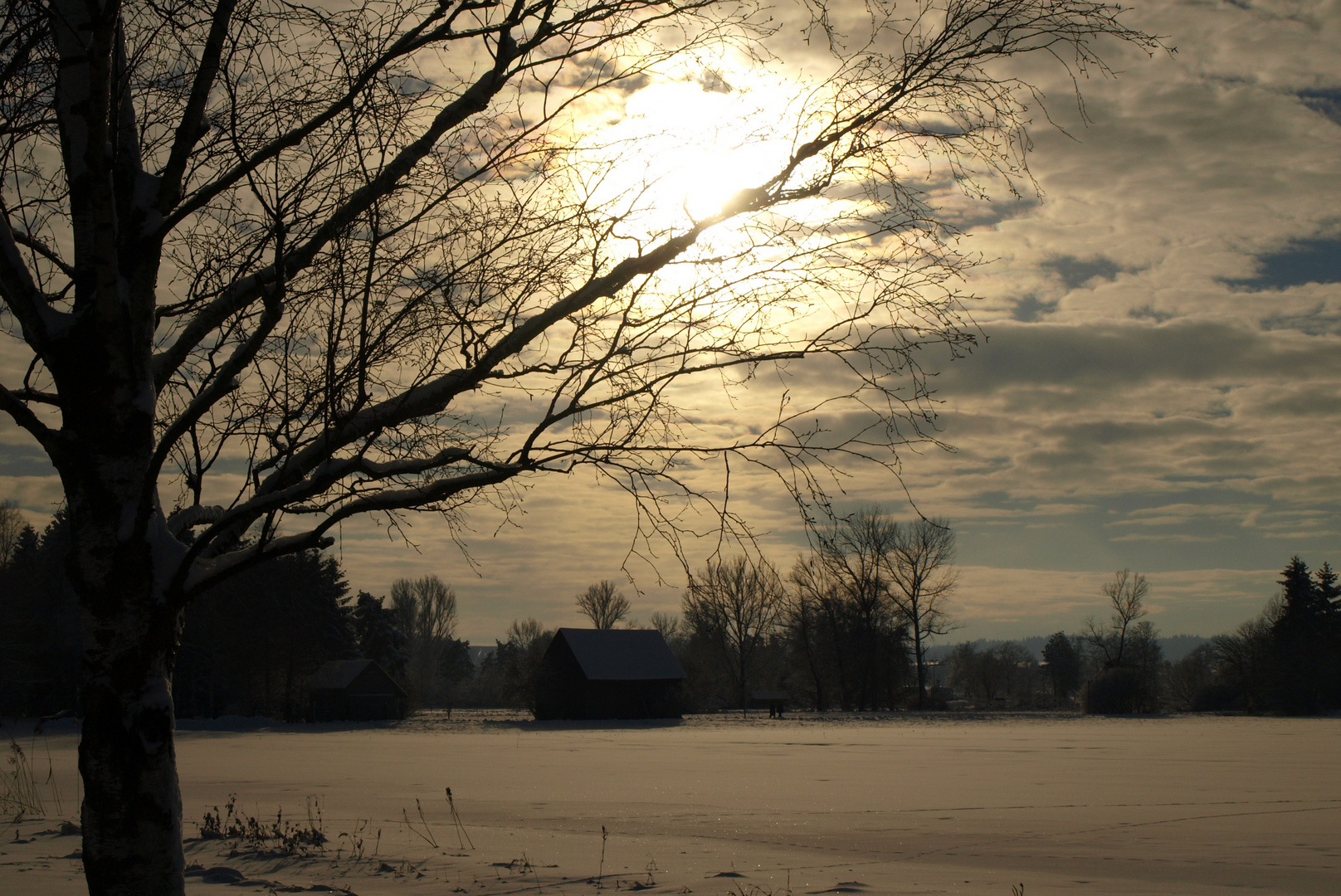 Winter am Federsee
