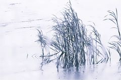 - winter am fluß VII -