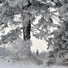 *Winter am Gänsehals II*